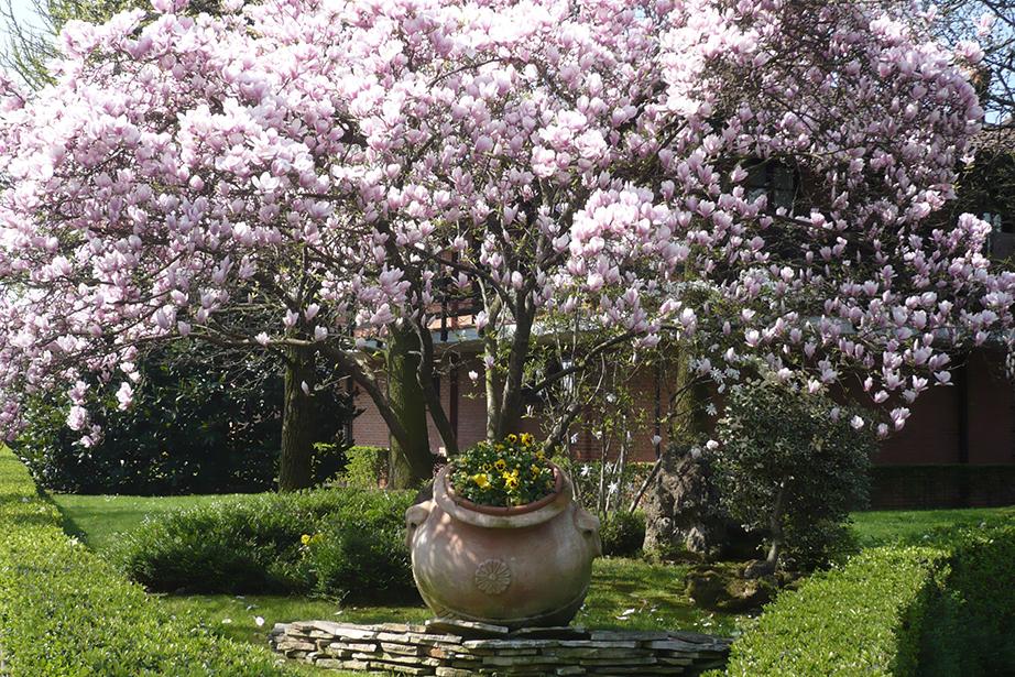 pianta fiorita nel giardino del ristorante
